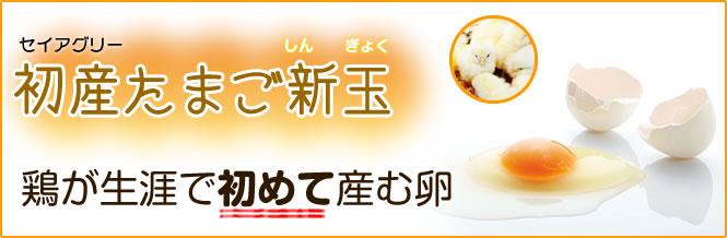 img_first_egg02.jpg