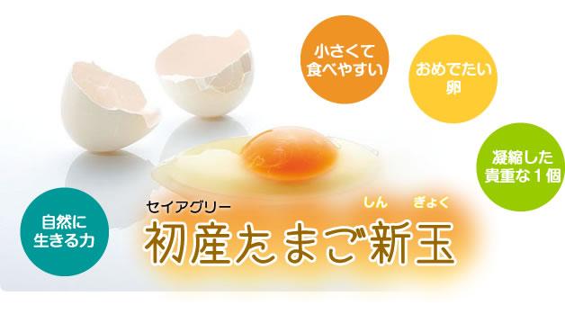 img_first_egg05.jpg