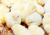img_first_egg04.jpg